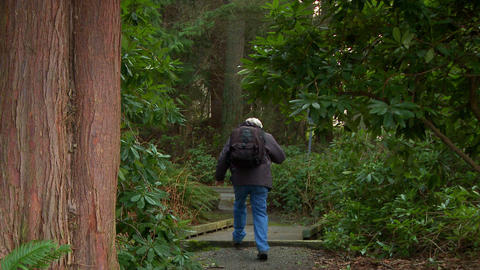 A man walks down a well-tended forest trail Footage