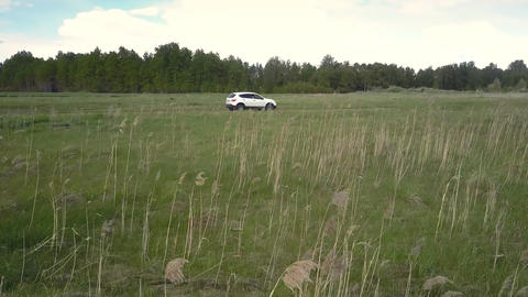 feather grass on field against driving car and forest Live Action