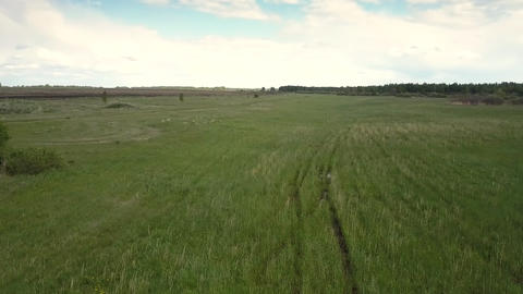 motion over green meadow with rare bushes trees to horizon Footage