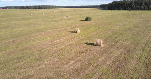 aerial motion to straw rolls on field with single bush Footage