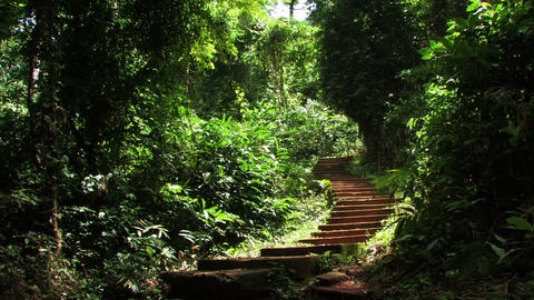 Stairs in a tropical forest Footage