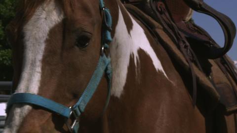 Slow handheld shot of a man saddling a horse at a ranch Footage