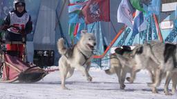 Kamchatka Kids Competitions Sled Dog Racing Dyulin Beringia Footage