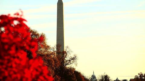 Tilting shot of Washington Monument in Washington DC Footage