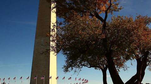 Tilting shot of Washington Monument and a big tree in Washington DC with lens fl Footage