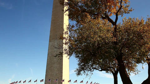 Tilt shot of Washington Monument and a big tree in Washington DC Footage