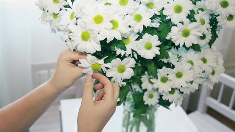 The woman guessing on the Daisy tearing off petals Footage