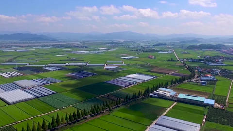 HyperLapse Aerial View of Jukdong Village Metasequoia Road, Changwon, Gyeongnam, South Korea, Asia Live Action