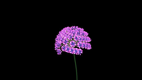3d Fractal flower blooming. African Lily 3d animation .... Stock Video Footage