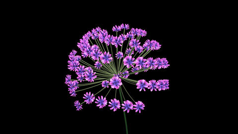3d Fractal flower blooming. African Lily 3d animation . Purple flower bloom Animation
