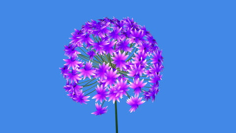 3d Fractal flower blooming. African Lily 3d animation . Computer generated procedural growth Animation