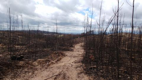 Burnt Forest, Forest Fire, Portugal フォト