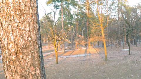 A short slow panorama of the spring park on the outskirts of the forest with Footage