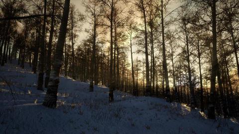 Majestic Winter Landscape Glowing by Sunlight Footage