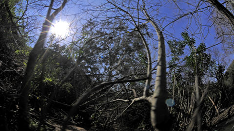 Time-lapse shot of a wooded area and the sun Footage
