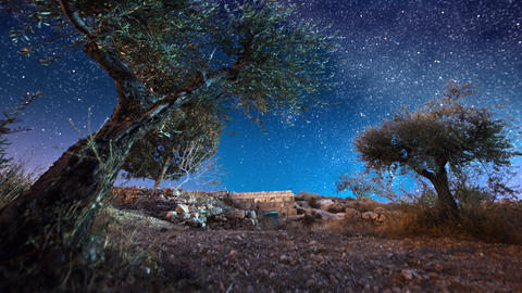 Astro time-lapse with olive trees in Bethlehem, Israel Footage