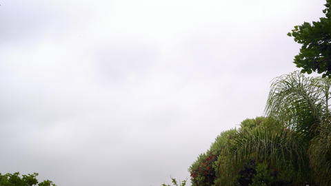 """Tilting shot of sky and trees above """"Welcom to LAX"""" sign Live Action"""