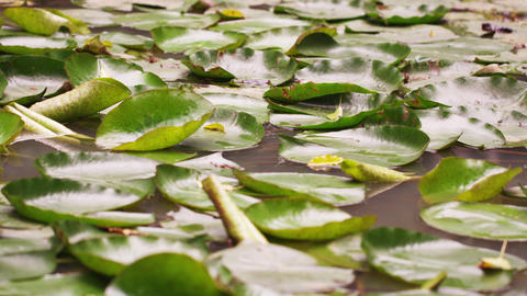 Close up of leaves resting on still pool Footage