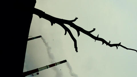 Smoking chimneys of plant and dead tree. Vertical frame Footage