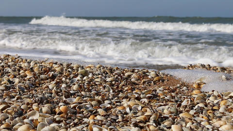 Nice-looking shell beach on the Black sea Live Action