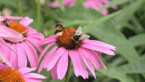 Honey Bee 0