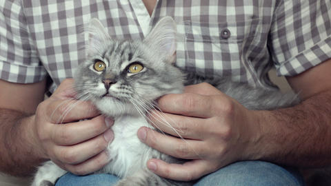 man caressing his cat Live Action