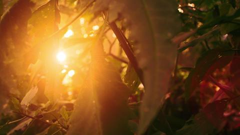 Slow sideways track sun through forest leaves Footage