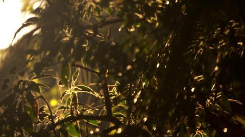 Racking focus footage of tree leaves Footage