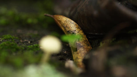 White mushroom and seedling amongst other forest detritus Footage