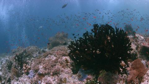 Raja Ampat Indonesia colorful coral reef 4k Footage