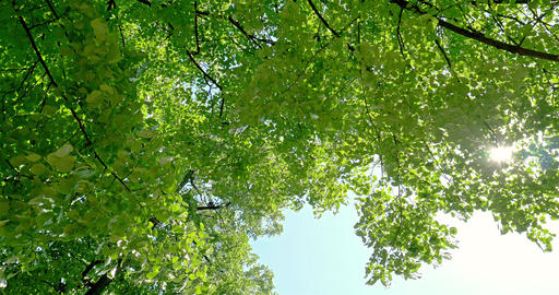 Sun On Blue Sky Visible Through Green Forest Trees Footage