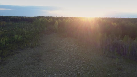 golden sunlight over horizon and large forest glade downward Footage