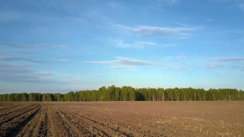 motion over ploughed field to green forest on horizon Live Action