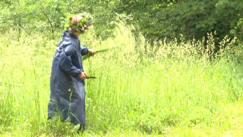 Woman with flower pick flowers in meadow Stock Video Footage