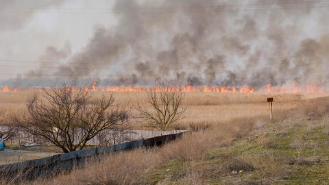 big fire in the field blown by a strong wind, Ukraine Archivo