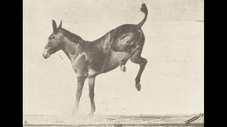 Donkey Kicking Photography Animation Loop Footage