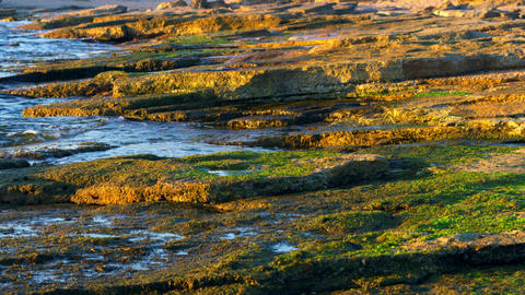 Royalty Free Stock Video Footage of the mossy shore at Dor Beach shot in Israel  Footage