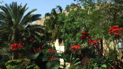 Royalty Free Stock Video Footage of oasis greenery at Ein Gedi shot in Israel at Footage