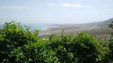 Royalty Free Stock Video Footage of a green shrub near the Dead Sea shot in Isra Live Action
