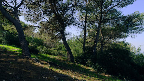 Royalty Free Stock Video Footage panorama of forested hillside shot in Israel at Footage