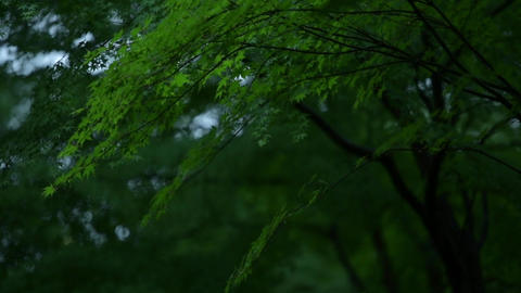 Fresh green in the rain Stock Video Footage
