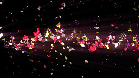 Colorful petals. Spiral shiny petals of blossoms. Flower... Stock Video Footage