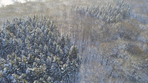 Flying over mixed tree forrest in Germany with snow covered trees during sunny winter day in Germany Live Action