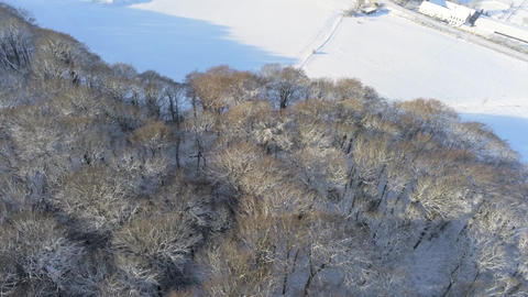 Aerial panning motion shot of snow covered mixed tree forrest during sunny winter day in the Eifel Footage