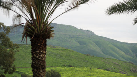 Royalty Free Stock Video Footage of a palm tree and green hills shot in Israel a Footage