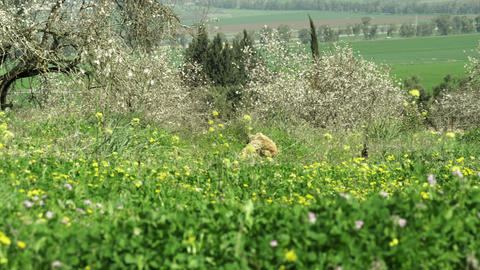 Royalty Free Stock Video Footage panorama of a meadow and trees shot in Israel a Footage