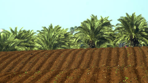 Royalty Free Stock Video Footage panorama of furrows and palm trees shot in Isra Footage