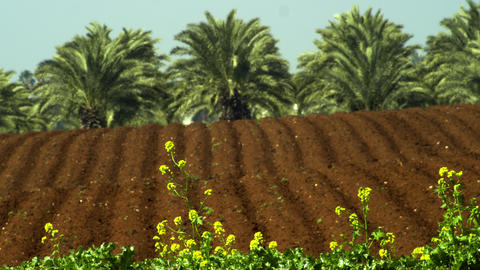 Royalty Free Stock Video Footage of furrows and palm trees shot in Israel at 4k  Footage