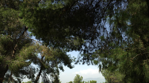 Royalty Free Stock Video Footage of coniferous trees shot in Israel at 4k with R Footage