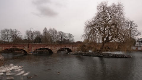 Time-lapse of swans on the river Avon in Stratford-upon-Avon, England Footage